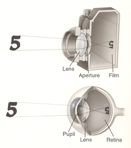 Image Comparing Eyes To Cameras By An Ophthalmologist In Brooklyn, NY